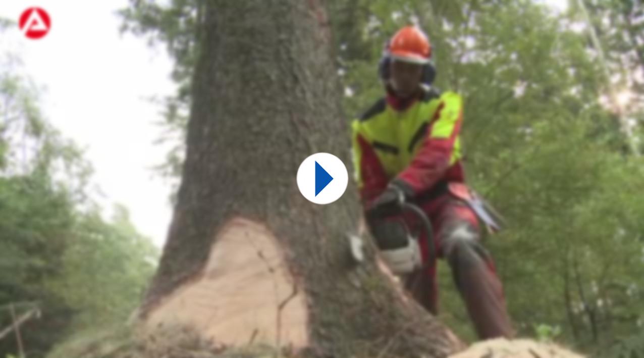 Ausbildung Forstwirt In Stadtverwaltung Stadt Leipzig