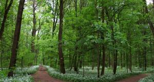 Stadtwald und auenwald stadt leipzig for Auenwald leipzig