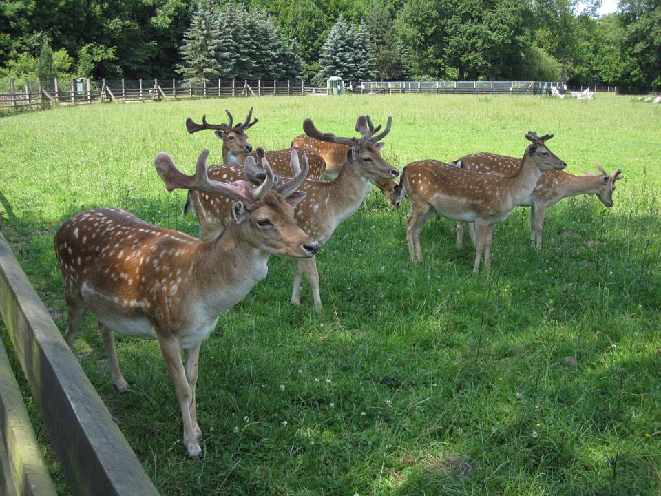 Wildpark in Leipzig-Connewitz öffnet ab Montag wieder