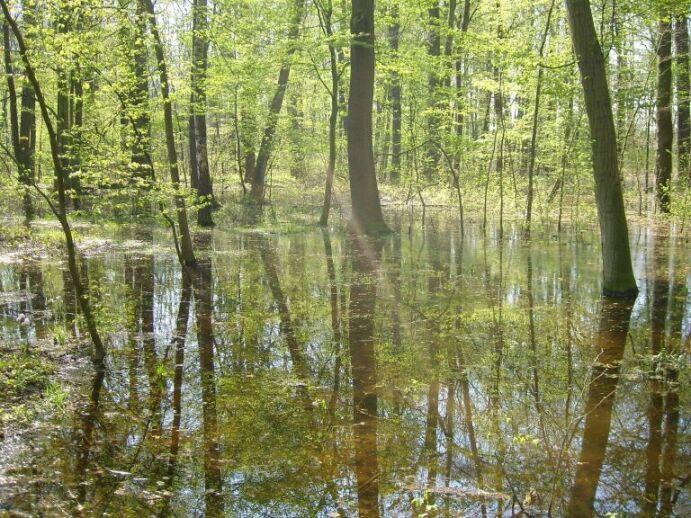 Informationen zum stadtwald stadt leipzig for Auenwald leipzig